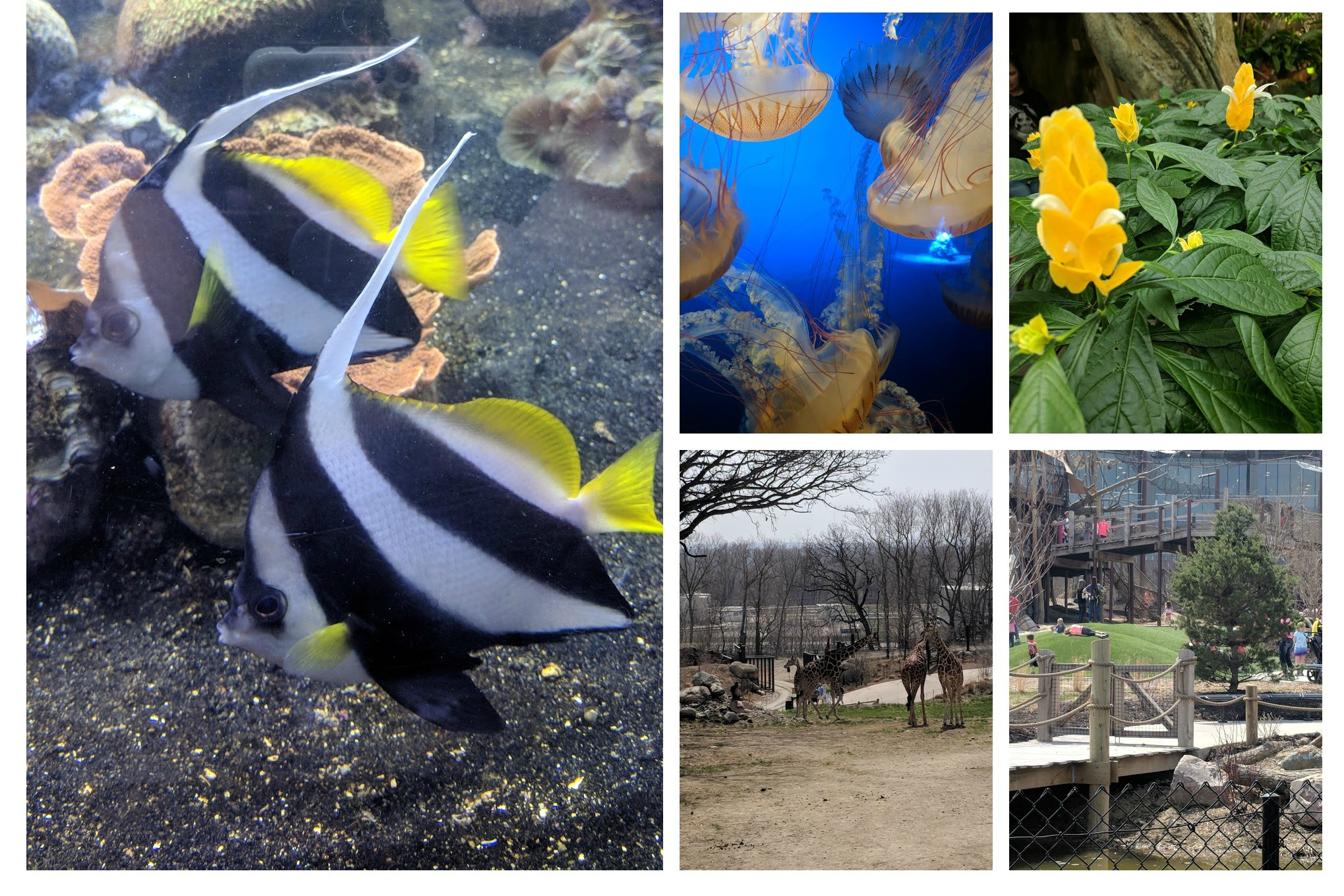 Collage Henry Doorly Zoo Omaha NE